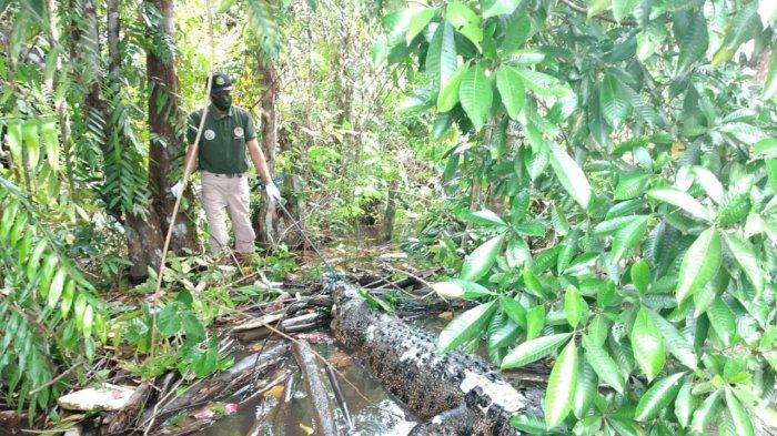 Buaya berukuran tiga meter penghuni Sungai Mentaya Kabupaten Kotim Kalteng ditemukan membusuk mengapung di sekitar Pelabuhan Dusun Belanti Desa Bangkoang,  Kecamatan Mentawa Baru Ketapang Sampit.
