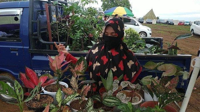 Monstera dan Aglonema Laris Manis, Pedagang Bunga di Banjarbaru Untung Jutaan Rupiah