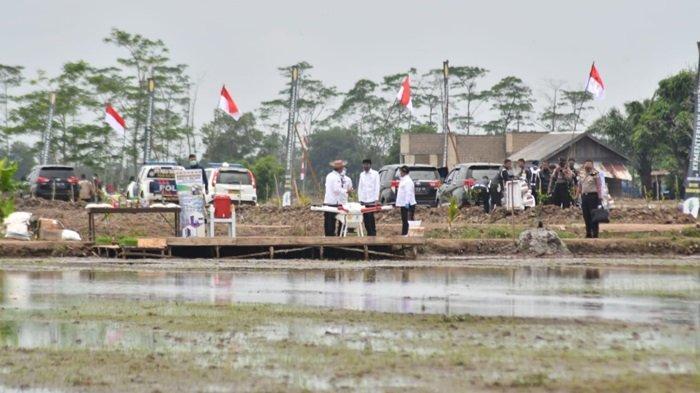 Pengembangan Food Estate Kalteng 30 Ribu Hektare Pakai Alat Modern Jadi Percontohan