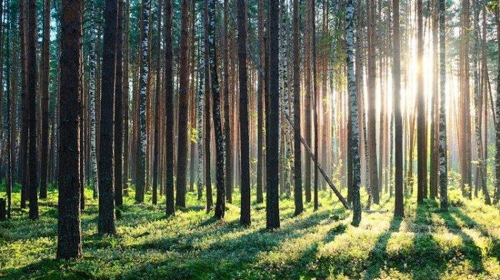 Diduga Disetubuhi 2 Teman Prianya, Gadis Ditemukan Nyaris Bugil di Hutan Pinus