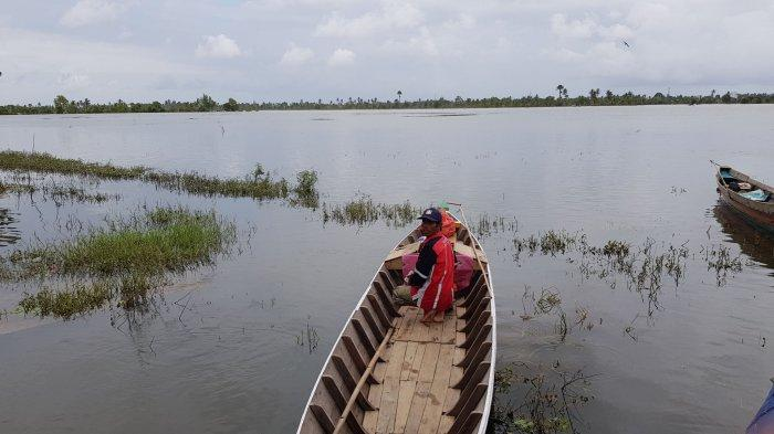 Diterjang Banjir, Ratusan Hektare Sawah di Handilnegara Tala Kalsel Terancam Tak Tertanami