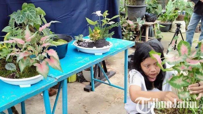 Penampakan Hutan Super Mini di Kediri, Kreativitas Saat Pandemi Covid-9