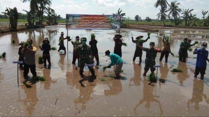 Kodim Kualakapuas Bersama Petani Tanam Padi di Lahan Demplot Desa Sidorejo Kapuas