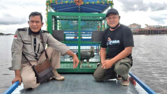 BKSDA Sampit Terima Penyerahan Burung Elang Dilindungi dari Warga Baamang