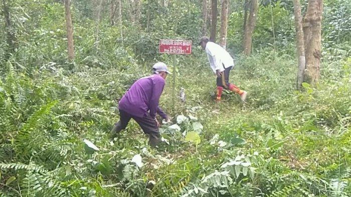 Cegah Kebakaran Hutan dan Lahan, BRGM Optimalisasikan Sumur Bor untuk Pembasahan Lahan Gambut