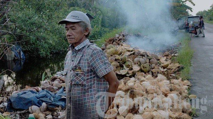 Puluhan Ribu Sabut Dibakar, Warga Teluk Sampit dan MHS Hanya Jual Batok Kelapa