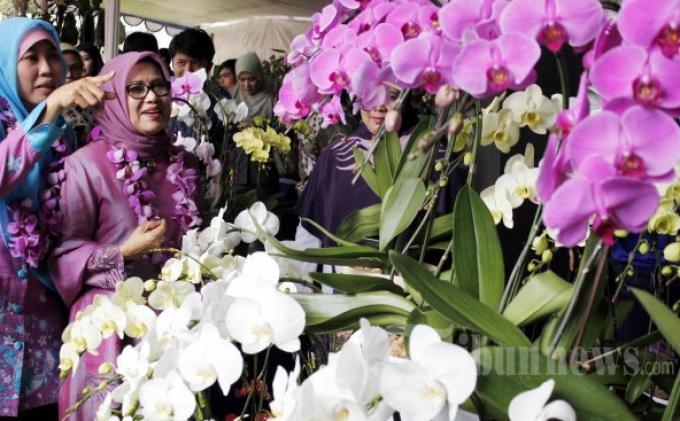 Tips Rawat Anggrek, 4 Cara Mudah agar Bunga Tumbuh Indah dan Tahan lama