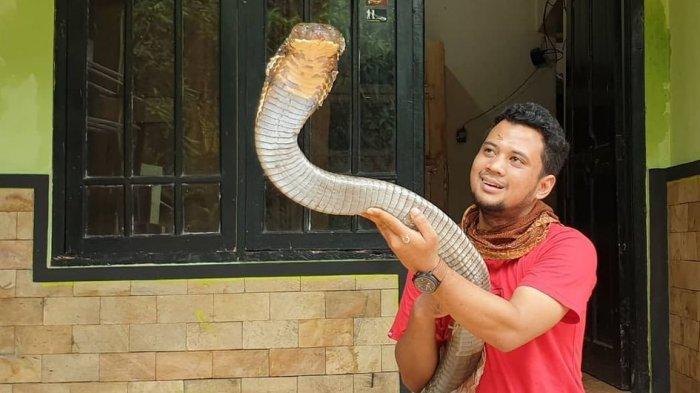 Penampakan Ular Liar Temuan Panji Petualang ini Tak Kalah Bahaya Dari King Kobra Garaga
