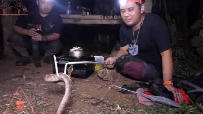 Panji Petualangan dan Galuh Cuisine temukan ular tanah berbisa