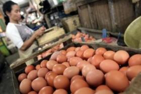 Harga Telur Meroket, Ternyata Ini yang Jadi Pemicunya