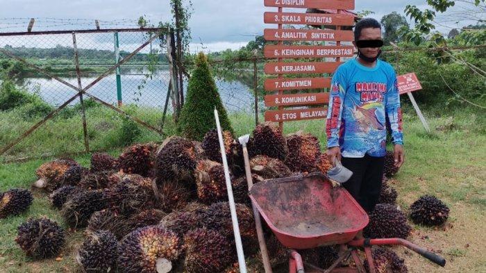 Mencuri Buah Sawit Milik PBS PT WNL, Petani Desa Cempaga Kotim Kalteng Diamankan