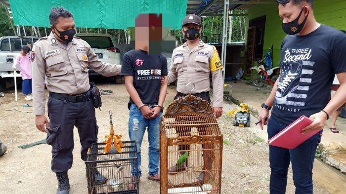 Kepergok Curi Burung, MA Diamankan Anggota Polsek Halong Balangan Kalsel