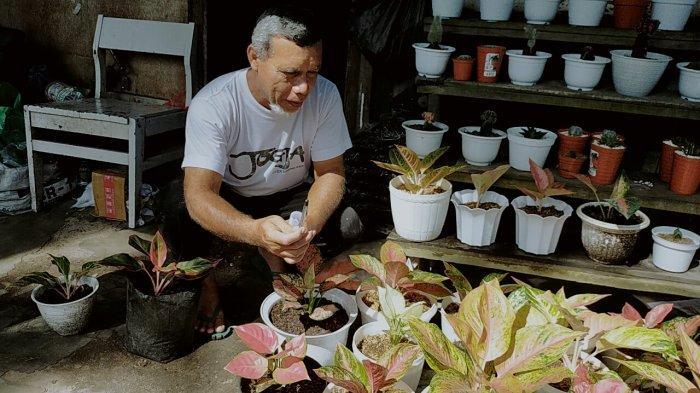 Harga Tanaman Hias di Sampit Ini Tetap Laku Meski Dijual Seharga Rp 2 Juta