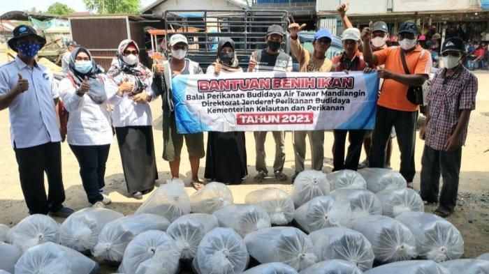 Dinas Perikanan Kapuas Salurkan 51 Ribu Benih Ikan Lele kepada Pokdakan