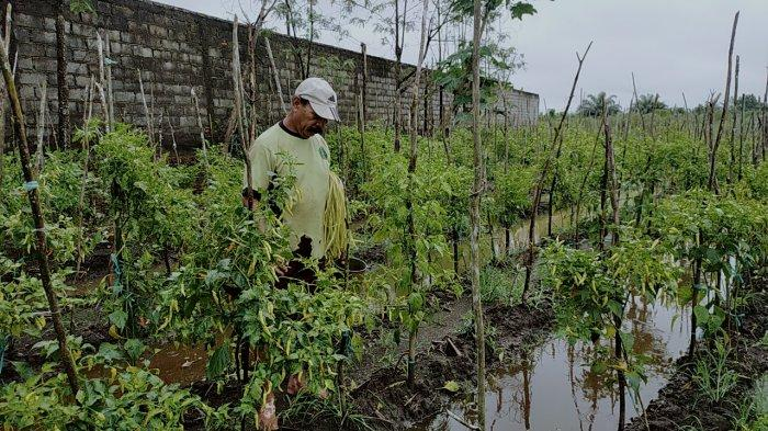 Satgas PDB Kalteng Perkenalkan Cara Membuat Tanah Subur Tanpa Membakar Lahan kepada Petani
