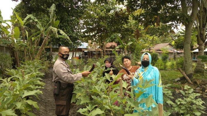 Warga Palangkaraya Tanam Sayuran Jaga Ketahanan Pangan, Bhabinkamtibmas Polsek Pahandut Lakukan Ini