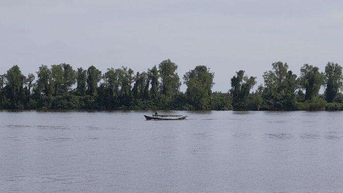 Buaya Sungai Mentaya Kotim Mengganas, Warga Diserang Hingga Lengan Putus