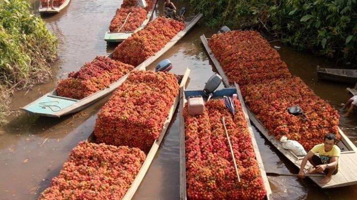 Segarnya Rambutan Tengguli Sambas, Dijual ke Seluruh Kalimantan!