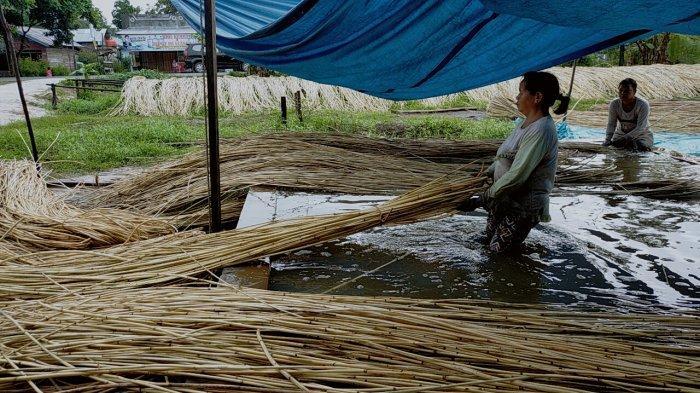 Menengok Pekerja Pembersih Rotan di Desa Telaga Biru Sampit Kabupaten Kotim, Kalimantan Tengah