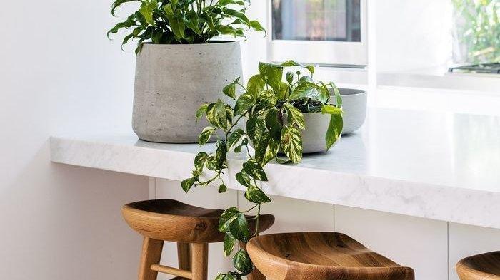 Dari Aglonema sampai Sirih Gading, 5 Jenis Tanaman Hias yang Cocok Ada Dalam Rumah