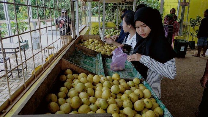 Travel: Taman Buah Lintang Batang Kotim, Jadi Tempat Persinggahan Musyafir