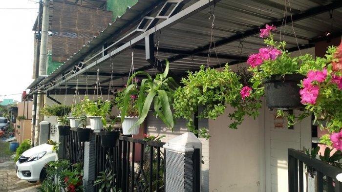 Ada 8 Tanaman Hias yang Paling Cocok dengan Pot Gantung, Dari Spider Plant Hingga Lili Paris