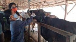 Periksa Kesehatan Hewan Kurban di Kapuas, Dinas Peternakan Pastikan Aman Dikonsumsi Masyarakat