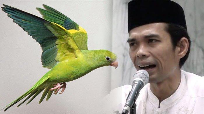 VIDEO: Burung Lovebird Hinggap di Kepala Ustaz Abdul Somad, ''Burung pun Sayang''