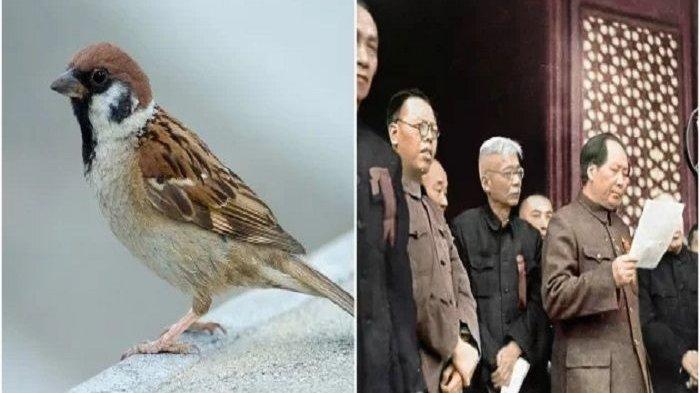Burung Emprit Dibasmi, 45 Juta Rakyat China Mati Kelaparan