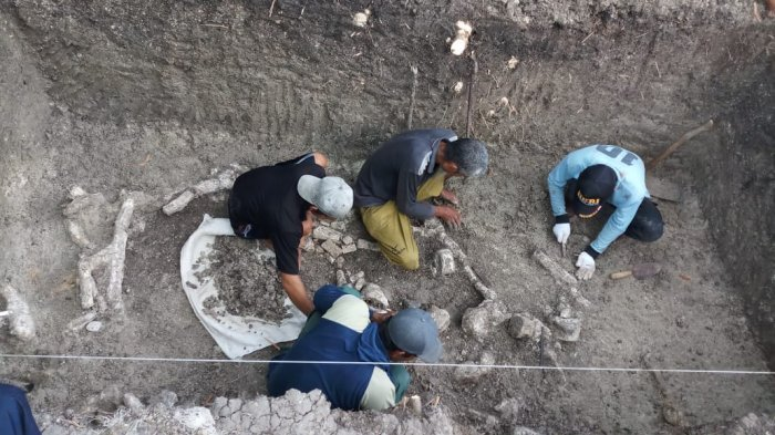 Gali Tanah Untuk Septic Tank, Ternyata Fosil Gajah Purba Ditemukan