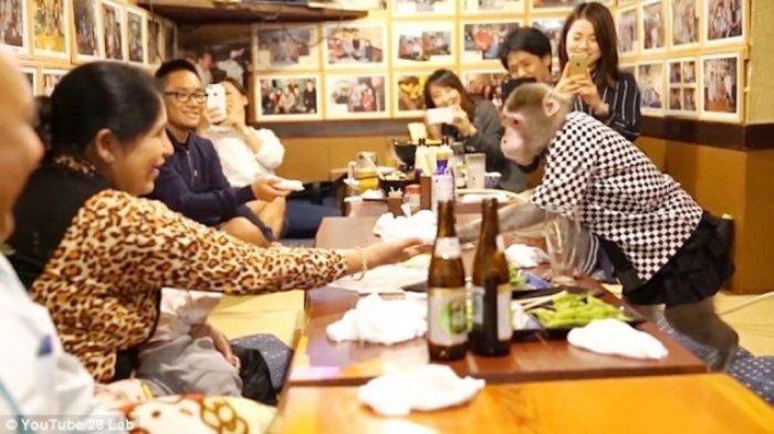 VIDEO: Sepasang Kera Ini Jadi Pelayan Restoran, Bayarannya Cuma Pisang