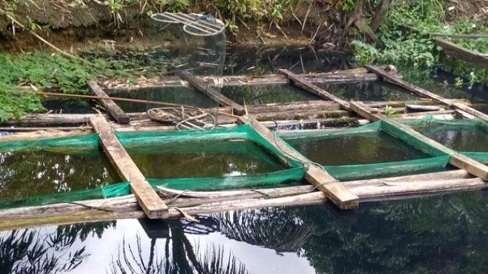 Banyak Ikan Mati, Pemilik Kolam Ikan Banua Lawas Kotabaru Mulai Resah