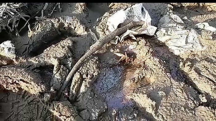 Banyak Ikan Mati di Danau Sembuluh Seruyan, Diduga Akibat Pencemaran