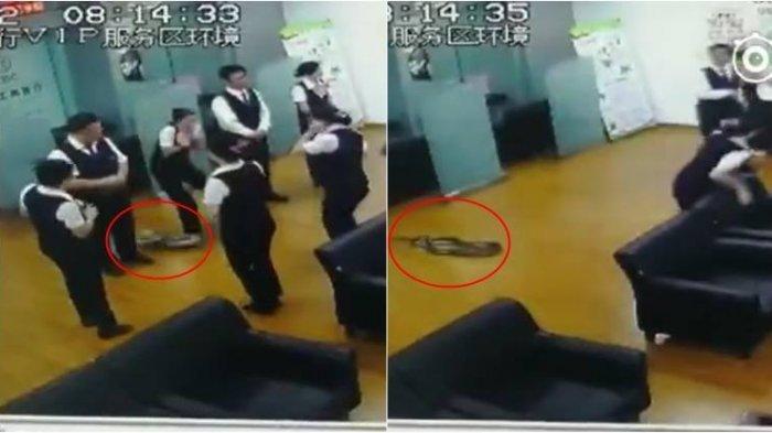 Ular Piton Jatuh dari Atas Plafon, Karyawan Bank di Tiongkok Berlarian