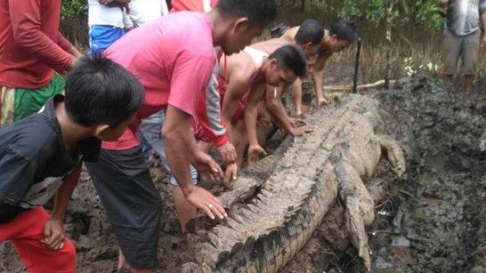 Viral Buaya Menimpa Genteng Rumah Warga Kota Malang, Jatuh dari Langit?