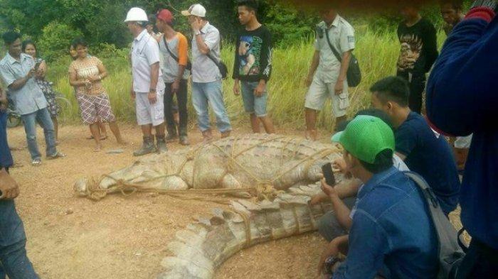 Banyak Warga di Bantaran Sungai Mentaya Hilang Ditelan Buaya, Tapi . . .