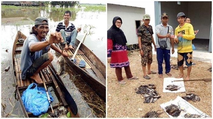 Per Ekor Dihargai Rp 1.000, Warga Desa di Kabupaten Banjar Ini Bersemangat Buru Tikus