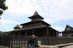Pohon Berusia 500 Tahun di Kotawaringin Barat Tumbang, Batangnya Mengeluarkan Air!