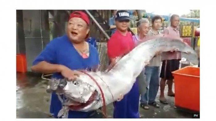 Diyakini sebagai Pertanda Gempa Bumi dan Tsunami, Ikan Ini Kembali Ditemukan Nelayan Jepang