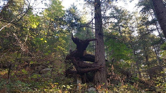 Tumbuh Alami, tapi Bentuk 14 Pohon Ini Bisa Bikin Merinding