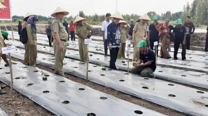 Cegah Inflasi, Bank Indonesia Kembangkan Tanaman Cabai dengan Petani di Kapuas