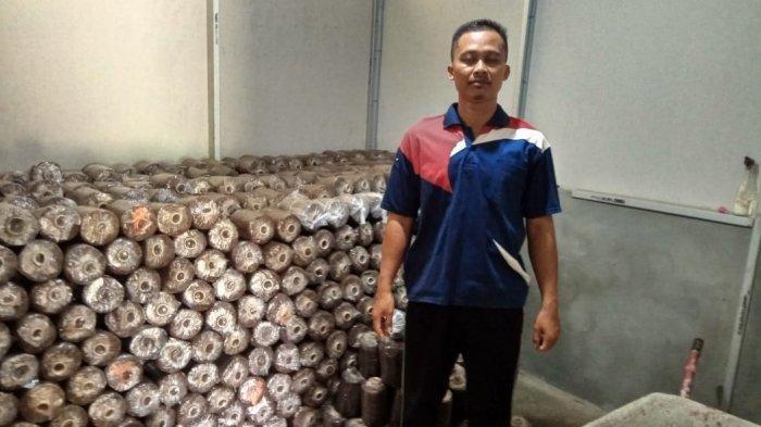Kalteng Impor 2 Ribu Janda Segar Tiap Minggu, Bapak-bapak di Batola Ini Tugasnya Pembibitan Janda