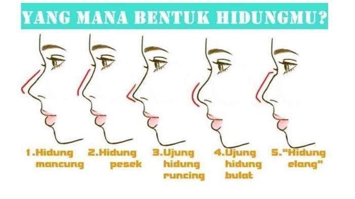 Karakter Kepribadian Bisa Dilihat dari Bentuk Hidung, yang Mana Bentuk Hidungmu?