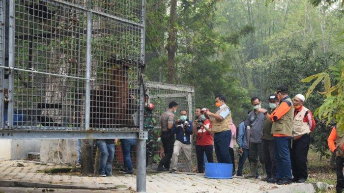 KaltengPedia : Yayasan BOSF Palangkaraya Selamatkan Orangutan