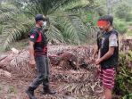 dua-warga-desa-keruing-kecamatan-cempaga-hulu-kabupaten-kotim-diduga-curi-sawit.jpg