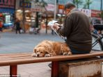 kebijakan-satu-anjing-untuk-satu-keluarga_20170613_111754.jpg