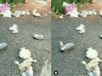 kucing-kucing-mati-terbungkus-plastik.jpg