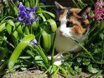 kucing-tanaman-hias.jpg