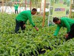 pasokan-sayuran-di-pasar-tradisional-palangkaraya-kalteng-umumnya-dari-petani-lokal.jpg