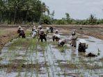 petani-di-kawasan-food-estate-desa-talio-kabupaten-pulangpisau-kalteng.jpg